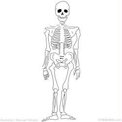 Coloriage halloween id es et conseils coloriage - Coloriage squelette halloween ...