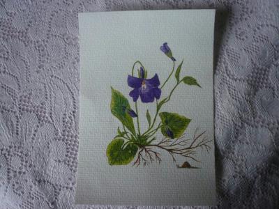 Violette et sa perle de ros e l 39 aquarelle cr ation for Peinture violette