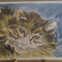 Le regard persant du chat