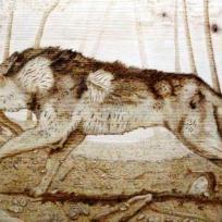 Pyro : lupo in caccia nel bosco d'autunno sugli appennini